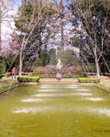 Bayou Bend Collections and Gardens